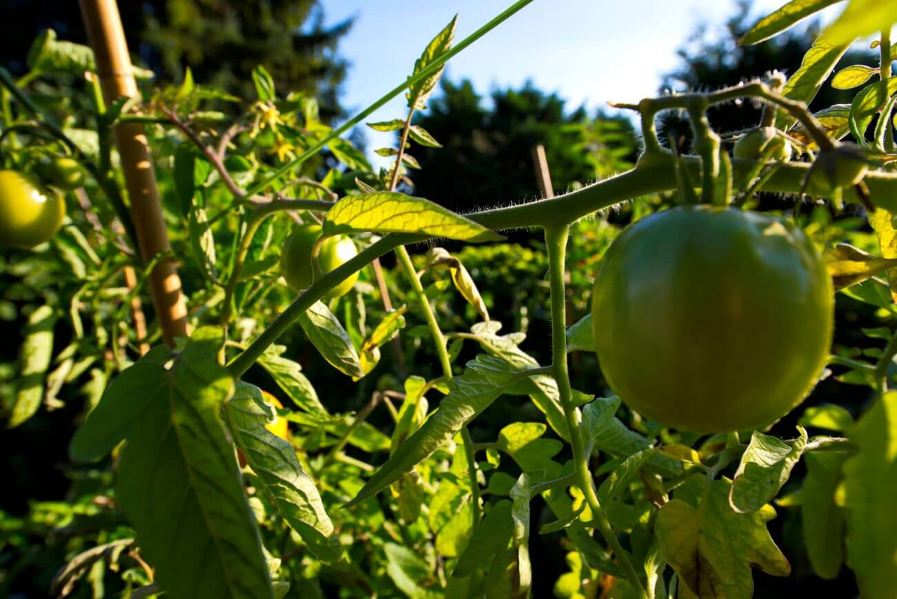 Gesundheit, Ernährung, Tomaten,