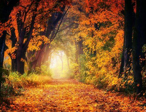 Stress vermeiden – mit guter Laune durch die dunkle Jahreszeit
