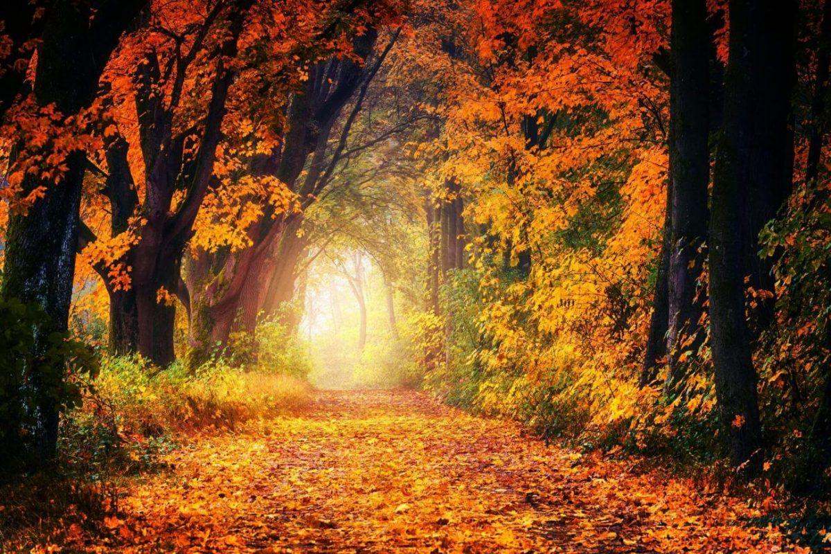 Herbst, Winter, Bäume, Wald,Stress vermeiden
