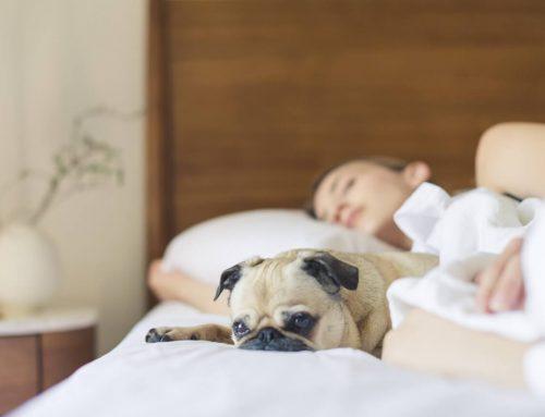 Wie man eine Matratze richtig pflegt
