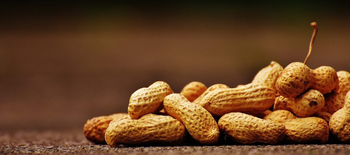 Erdnüsse-Allergie, Erdnussallergie