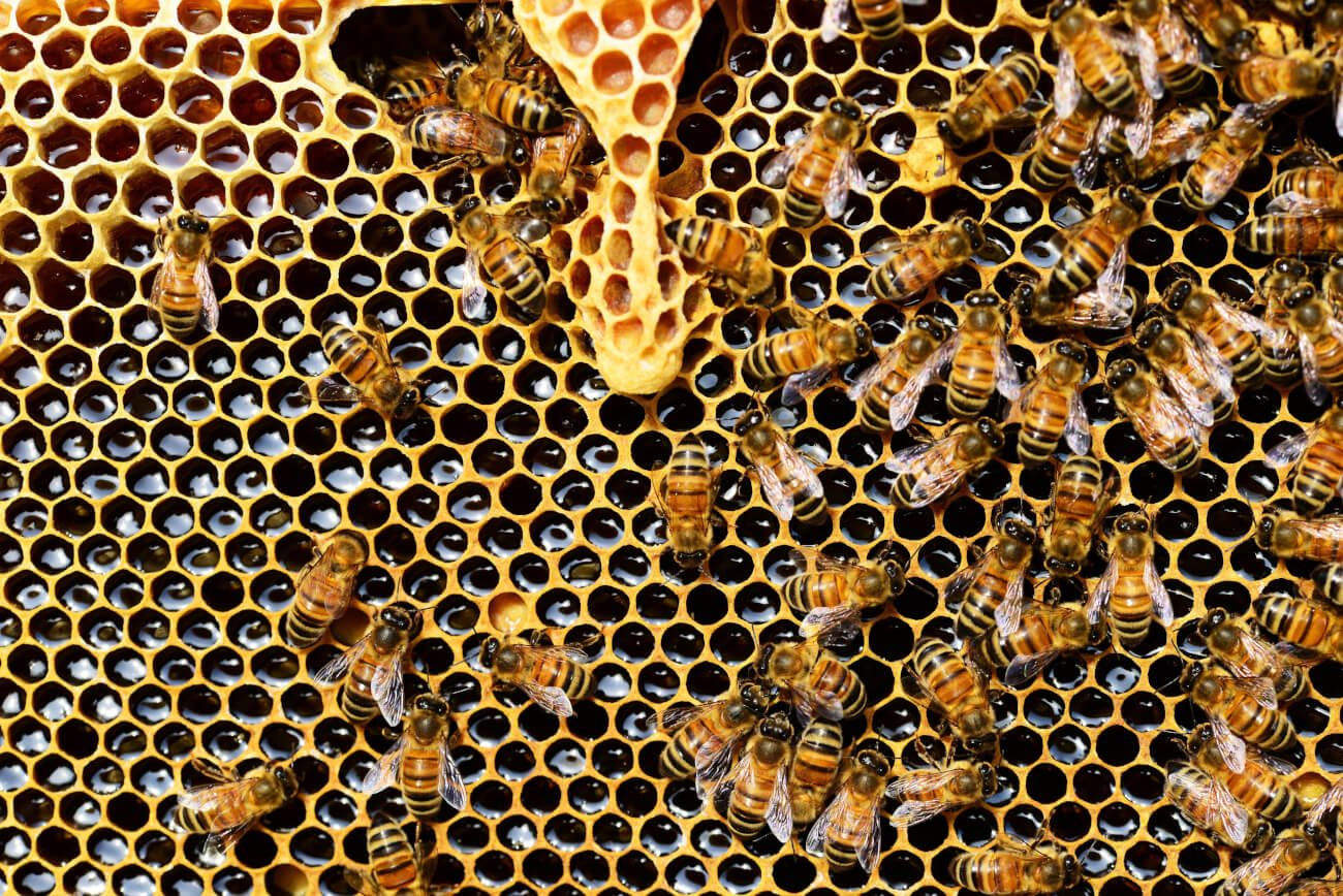 Honig, Gesund, Zucker, Süss, Bienen, apis-mellifera-biene-